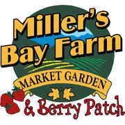 Miller's Bay Farm Strawberries